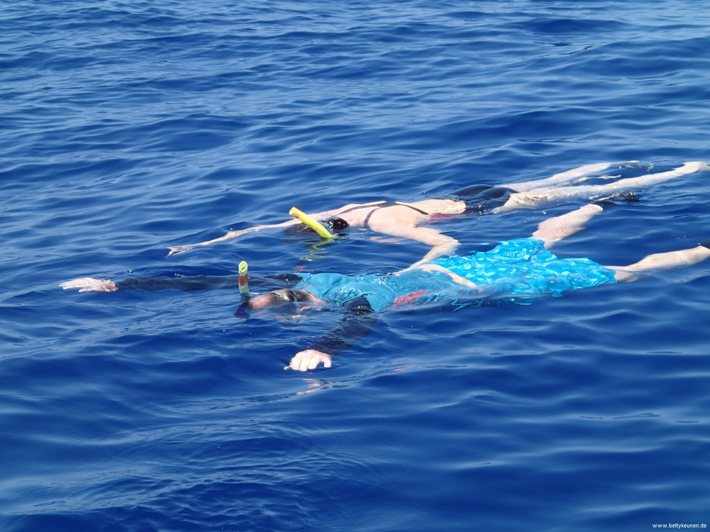 Schwimmen mit Walen