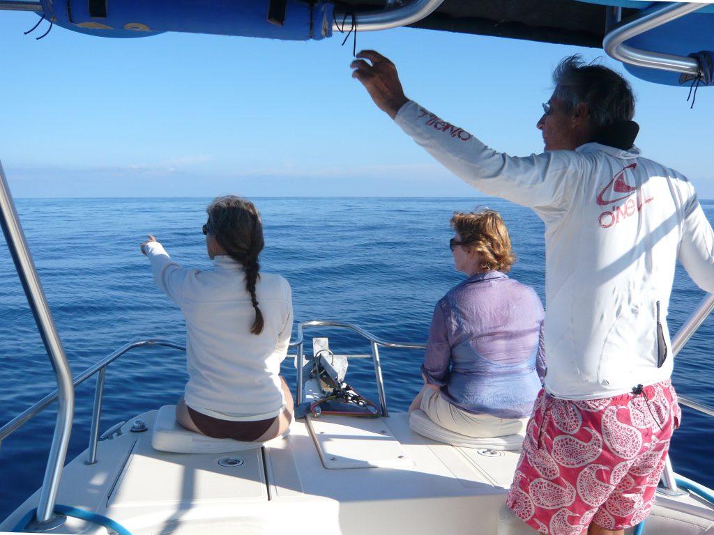 Whale Watching mit Boot und Kajak